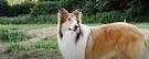 Trailer: Lassie sa vracia (2020)