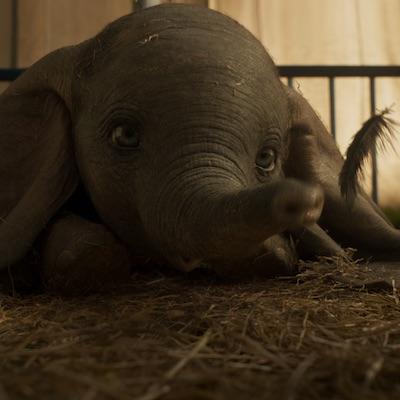 Od dnes v kinách osem nových filmov, vrátane My, Verní, neverní, Dumbo, či Arctic: Ľadové peklo