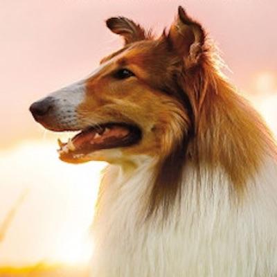Šesť nových filmov prichádza dnes do kín, bude Mladý Ahmed, Emma, Christo, či Lassie